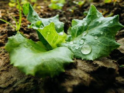 rolnictwo, ochrona roślin